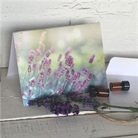 Greeting Card: Lavender Morning Light