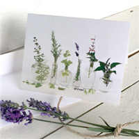 Greeting Card:  Glass Vases with Herbs